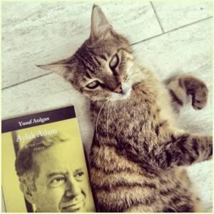 Aylak Adam ve kedi.