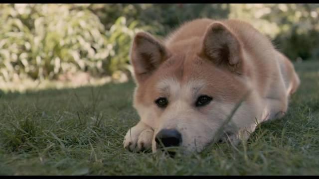 Hachiko: Bir Köpeğin Hikayesi - Hachi: A Dog's Tale