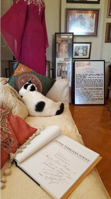 Zuhal Yorgancıoğlu'nun Sevgili Kedisi