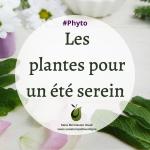 [Phyto] Sélection de plantes pour des vacances sereines, un été tranquille !