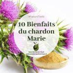 10 bienfaits du chardon-Marie
