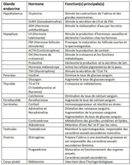 hormone-glandeendocrine2_aphadolie