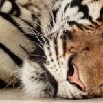 Relación entre niveles de testosterona y calidad del sueño