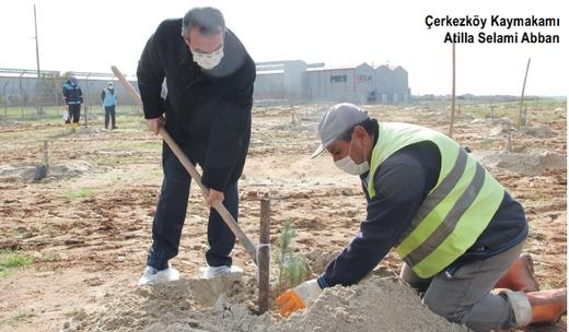 ÇOSB ile Çerkezköy arasına 350 fıstık çamı dikildi