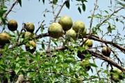వెలగపండూ-వైరాగ్యం