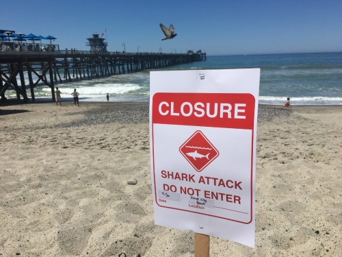 Sharks were seen throughout the shores of San Clemente from May through the end of October. Photo: File