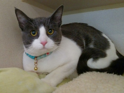 Pet of the Week: Peach. Photo: Courtesy of the San Clemente/Dana Point Animal Shelter