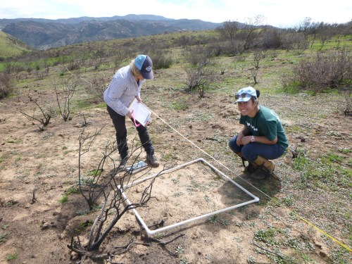 Dr. Sarah Kimball (l.) and Priscilla Ta of the UCI Center for Environmental Biology working in the Baker Canyon area of the Santa Ana mountains as part of the center's study on the resilience of plant communities in Orange County. Photo: Courtesy of UCI