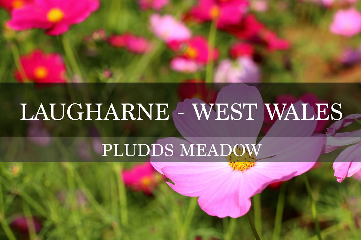 Pludds Meadow Development - Laugharne