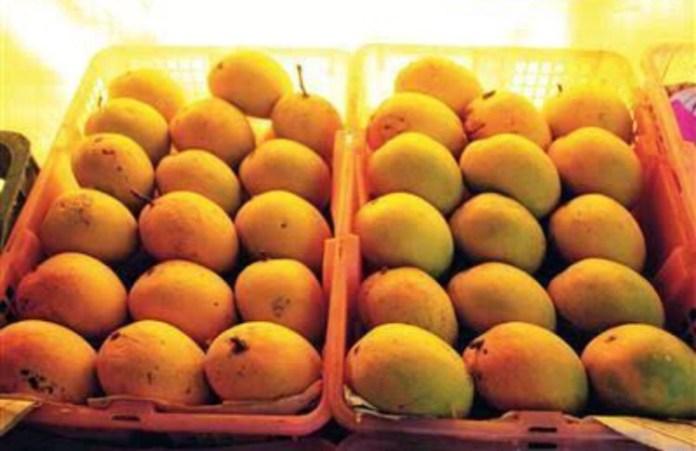 gi tag mango