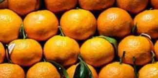 citrus fruits hindi