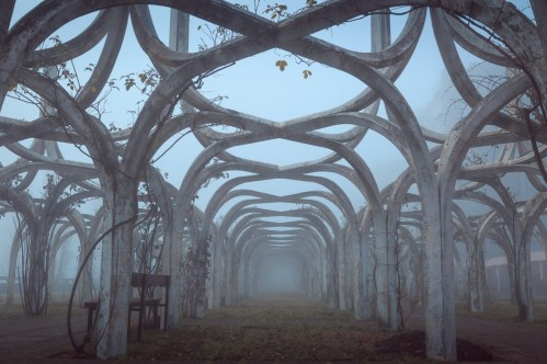 Decaying rose garden on a foggy, autumn day.