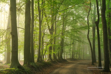 Lane of trees during a foggy morning in early autumn.