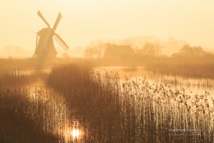 Dutch sunrise with traditional windmill in the wetlands and spring fog.