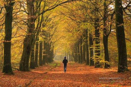 Man walking in a lane of trre's on an autumn day.