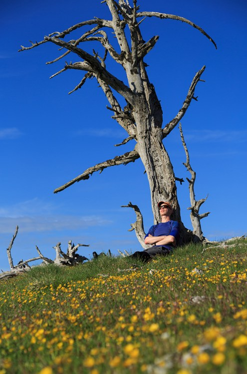 Relaxing at a tree trunk during a beautiful summers day.