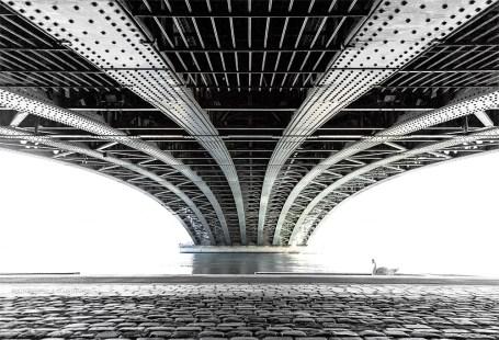 Swan under 'Pont de l'Universite' over the Rhone river.
