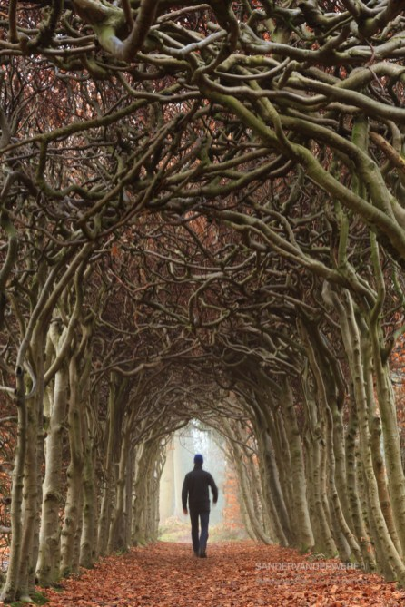 Man walking in a tunnel of trees during an autumn morning.