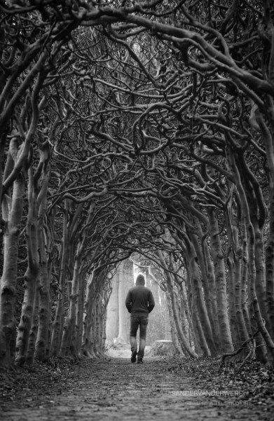 Man alone walking in a tunnel of trees on a foggy, spring morning.
