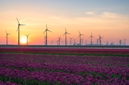 Field of tulips and wind turbines during a clorful sunrise in the Dutch countryside near Eemshaven.