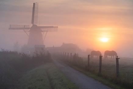 Foggy, summers sunrise in the Dutch countryside near a windmill.