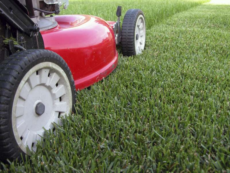 Lawn Care Services Near Me near Wooded Area