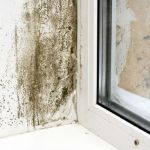 Mold and Mildew San Diego CA