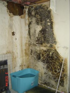 Mold remediation Specialists Santee CA