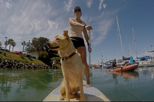 SUP Pups San Diego paddleboard lessons