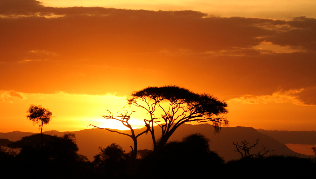 What Are Cheetahs Habitat