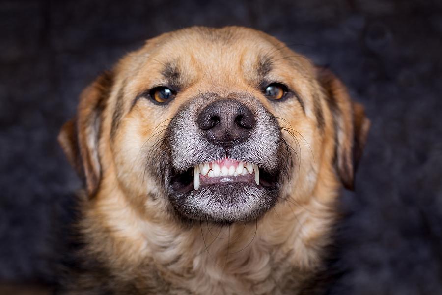 Steps to Take After a Dog Bite Injury - Sand Law PLLC - North Dakota Dog Bite Personal Injury Attorney
