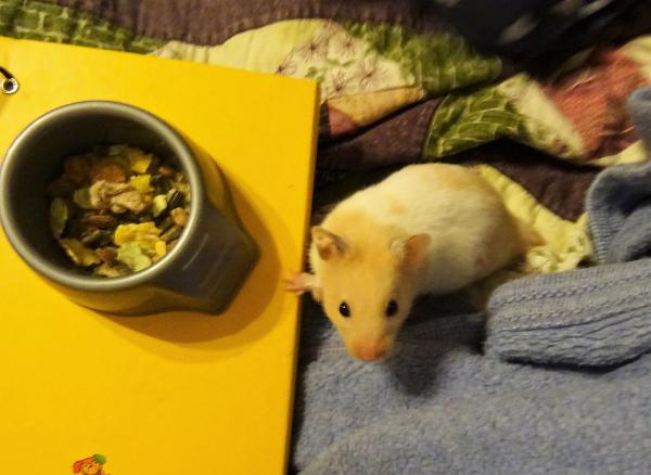 Alphabet quilt hamster