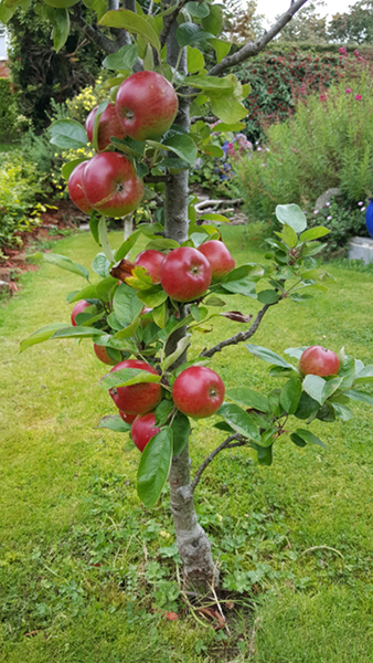 Sandra Healy Designs Apple Tree