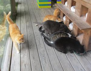 Cats on the porch