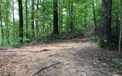 Avery Creek: Bennet Gap Trail – Perry Cove Loop