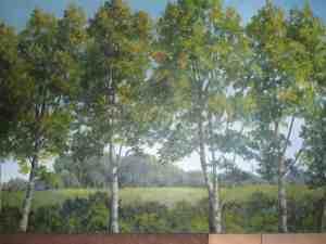 Poplars Image