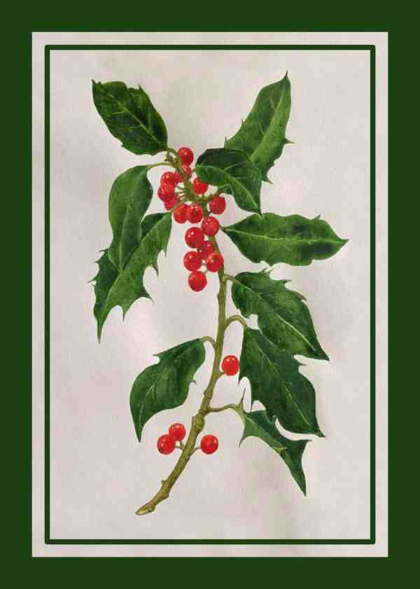 image of fine art print Christmas card, Berried Holly, by Sandy Kendall, Surrey artist