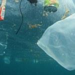 novo-comportamento-sem-sacolas-plasticas