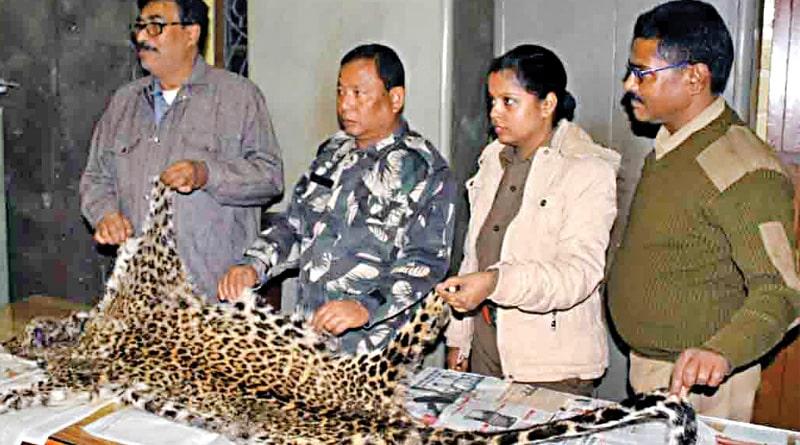 leopards-skin_web