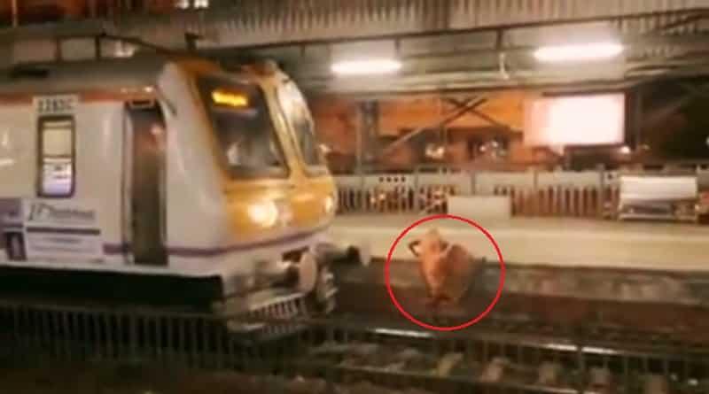 train-accident_web