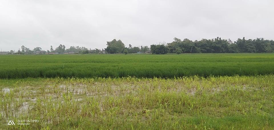 गएराति देखी भइरहेको वर्षाले धान उत्पादनमा वृद्धि हुने भन्दै रौतहटेली किसानहरु खुसी ।