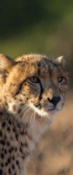 J9 à J12 – Du 13 au 16/05/19 – Le Parc National de Kruger