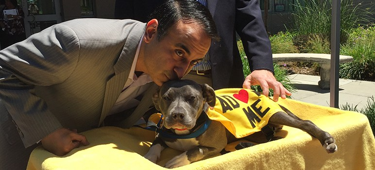 San Jose Councilman Proposes No-Kill Animal Shelter | San Jose Inside