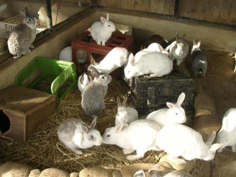 ウサギが過剰繁殖した神戸市内の小学校のウサギ小屋(兵庫県学校動物サポート協議会提供)