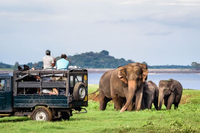 Image result for Minneriya safari.