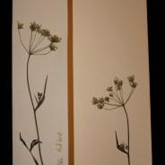 Blumenkarte Nr 3