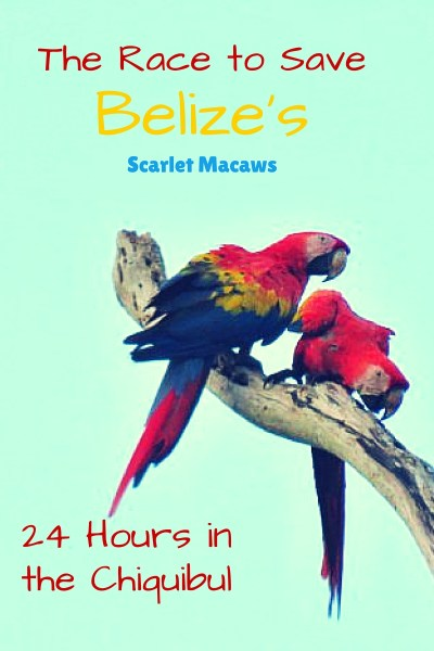 24 Hours in Belize's Chiquibul:  Heroes Saving A Belize National Treasure - The Scarlet Macaw