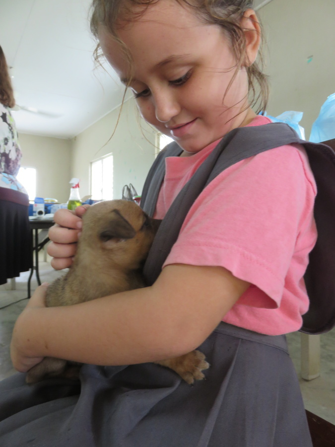 Img 6643: A Dangriga Pet Clinic: Animals In Need...So Many...And The
