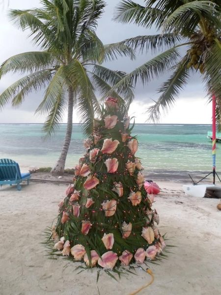 conch tree