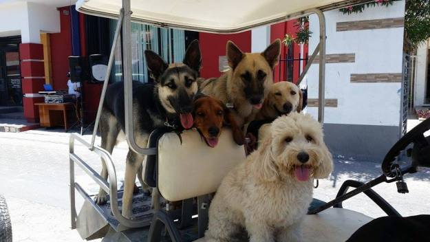 dogs-in-cart